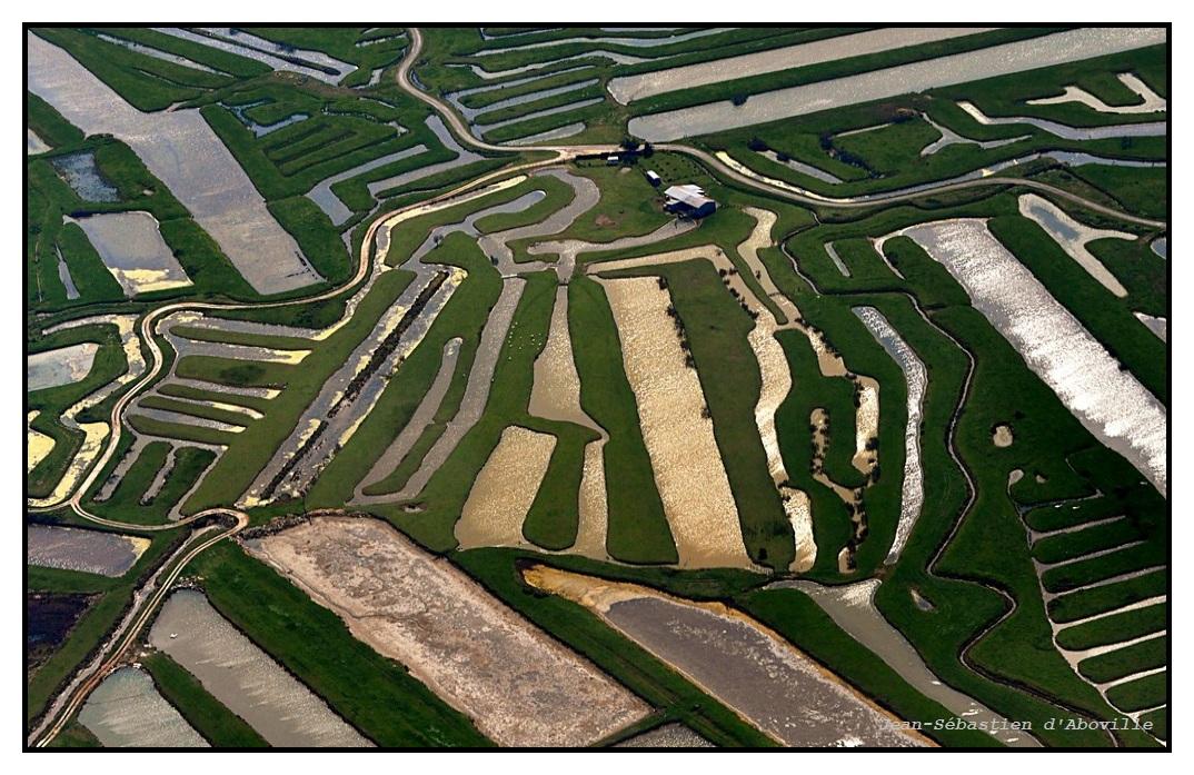 Marais et canaux, photo aérienne de l'Ile d'Oléron
