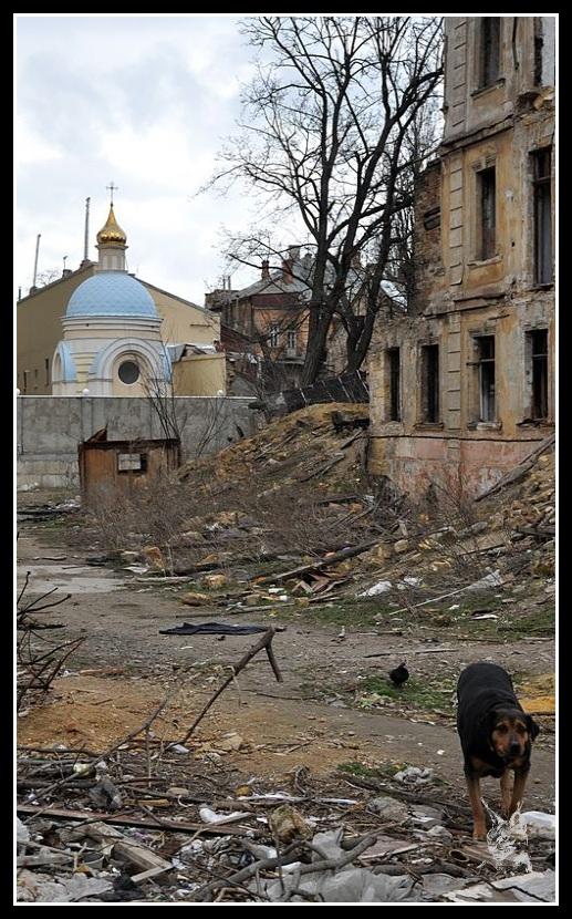Ukraine - Odessa Chien dans les ruines